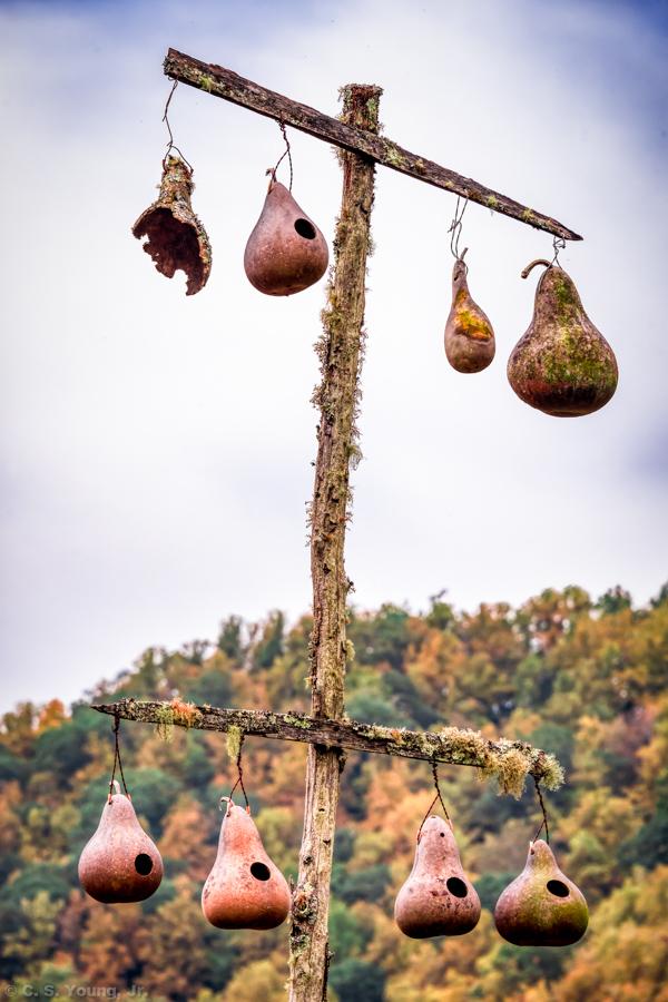 Gourd Birdhouse Composition 1